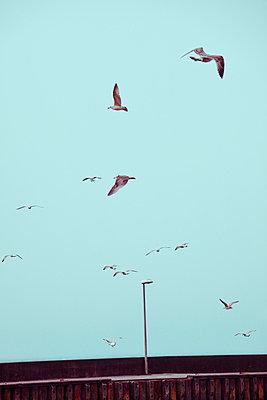 Seagulls - p4320904 by mia takahara
