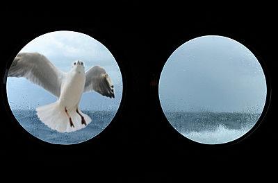 Seagull on sea - p533m885398 by Böhm Monika