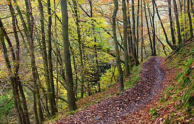 Footpath through autumnal woodland above the Nedd Fechan River near Pontneddfechan, Brecon Beacons National Park, Powys, Wales, United Kingdom, Europe - p8713111 by Adam Burton