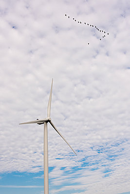 Migratory birds over wind turbine - p1079m1137129 by Ulrich Mertens