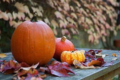 Stillleben im Herbst - p830m1008246 von Schoo Flemming