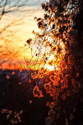 Sonnenuntergang - p979m1444911 von Martin Kosa