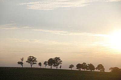 Baumreihe am Horizont - p1268m2204936 von Mastahkid