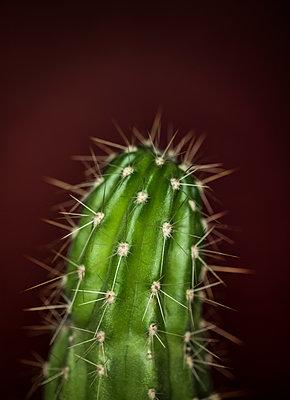 Cactus - p971m1190910 by Reilika Landen