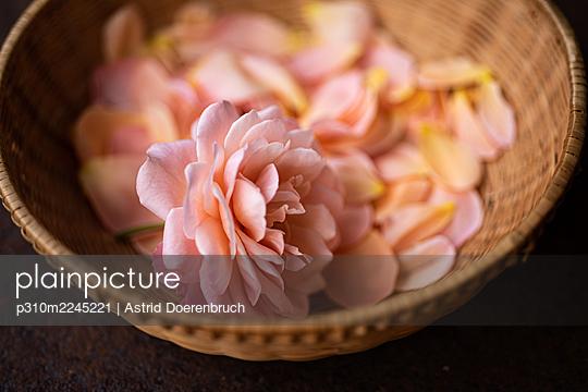 Mehr Rosenblütenblätter - p310m2245221 von Astrid Doerenbruch
