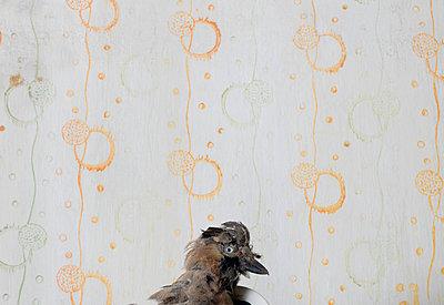 Präparierter Vogel - p1279m2125623 von Ulrike Piringer