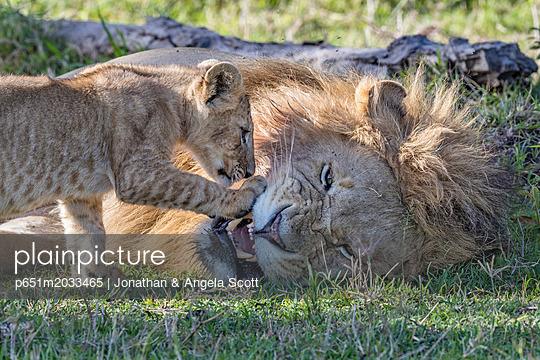 p651m2033465 von Jonathan & Angela Scott