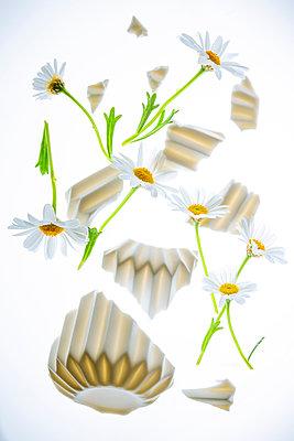 Broken vase of flowers - p1149m2187961 by Yvonne Röder