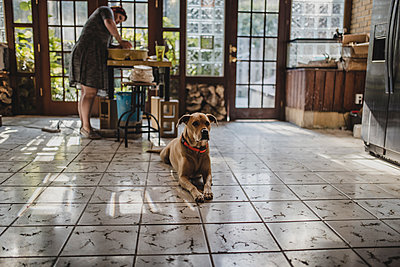 Female potter making clay pot at pottery with dog sitting on tiled floor in foreground - p1166m1512989 by Cavan Images