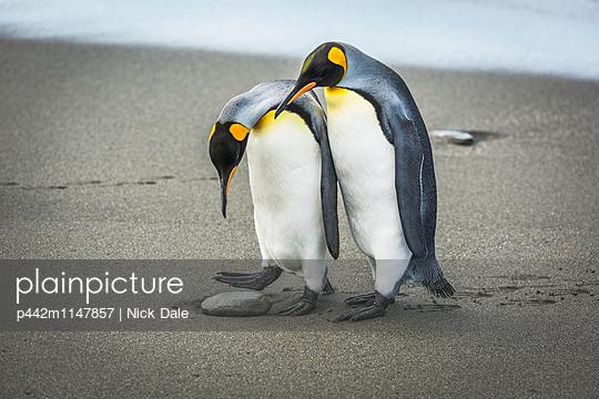 p442m1147857 von Nick Dale