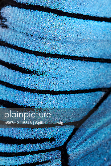 Butterfly wing - p587m2115516 by Spitta + Hellwig