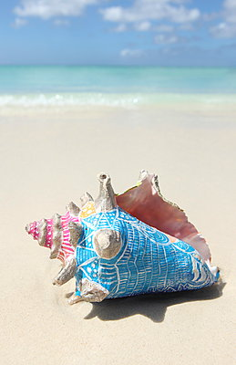 Painted shell - p045m907280 by Jasmin Sander