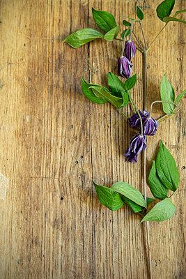 Welke Blume - p1156m2087707 von miep