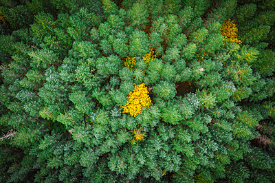 Beautiful pine trees from above - p1166m2201796 by Evgeny Vasenev