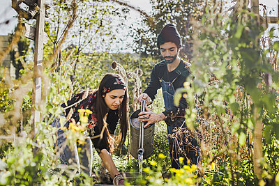 Couple watering plants in urban garden - p300m2121937 by ZOI IMAGERY