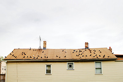 Pigeons on roof of home in Chicago, Illinois - p3720414 by James Godman