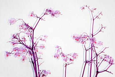 Blüten - p415m1057736 von Tanja Luther
