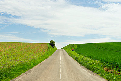 Rural road between crop fields - p429m663967 by Mischa Keijser