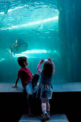 Young brother and sister photographing on camera phone at aquarium - p924m895668f by Zero Creatives