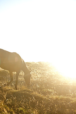 Horse in the backlight - p533m2044343 by Böhm Monika