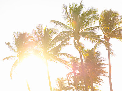 Palm trees against sunlight and clear sky - p1427m2163686 by Tetra Images
