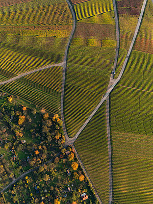 Aerial view of crops in agricultural field during autumn, Stuttgart, Baden-Wuerttemberg, Germany - p301m1406283 by Stephan Zirwes