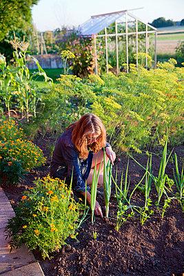 Woman working in garden - p312m996618f by Lena Granefelt
