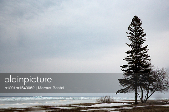 Pine at the lake - p1291m1540082 by Marcus Bastel