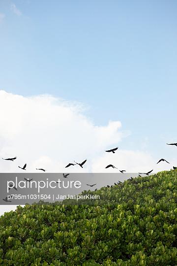 Flock of birds - p795m1031504 by Janklein