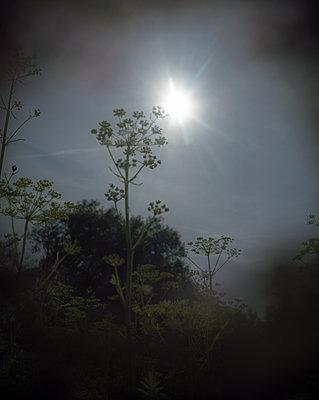 Wildblume - p945m2027341 von aurelia frey