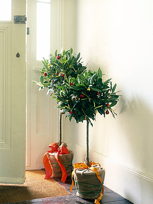 Alternative Christmas trees at open door. - p349m2167790 by Polly Wreford