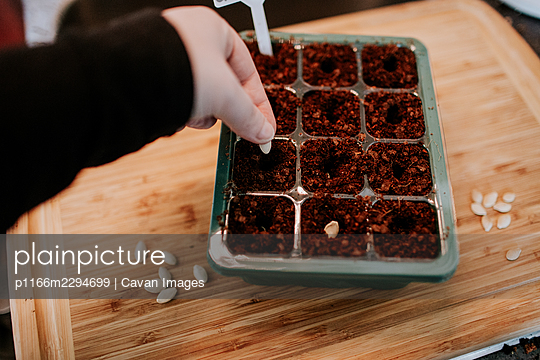 Overhead view of person planting seeds in seed starter - p1166m2294699 by Cavan Images