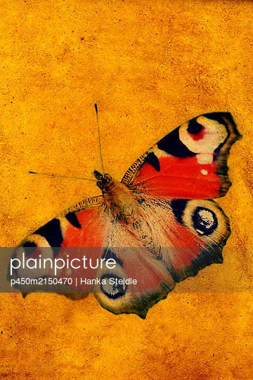 Peacock butterfly - p450m2150470 by Hanka Steidle