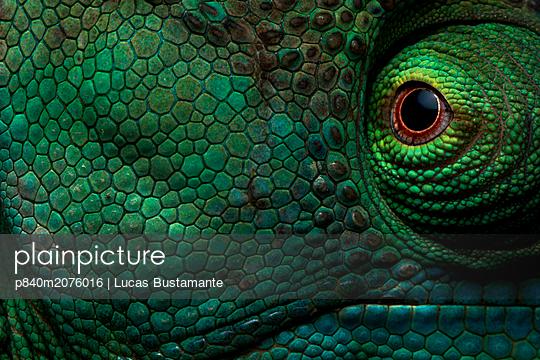 p840m2076016 von Lucas Bustamante