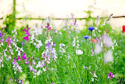 Blumenwiese - p570m816665 von Elke Röbken