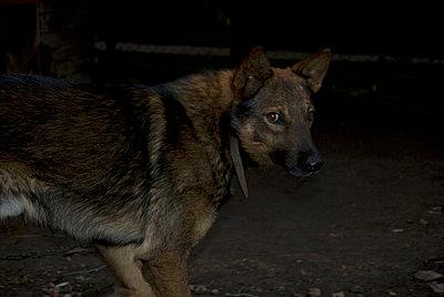 Scheuer Hund - p0750307 von Lukasz Chrobok