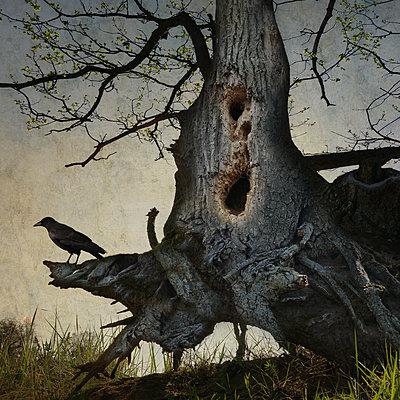 Black Winged Messenger Part XVIII - p1633m2208870 by Bernd Webler