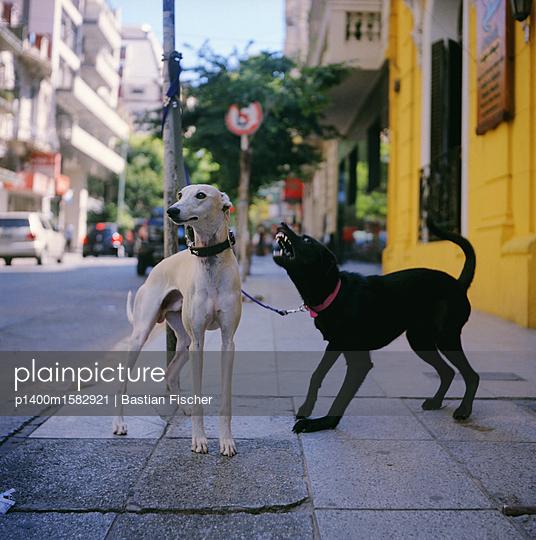 Ein schwarzer Hund bellt einen weißen Hund auf offener Straße aggressiv an - p1400m1582921 von Bastian Fischer