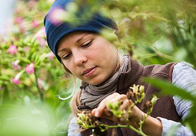 Austria, Schiltern, Alternative gardener at tobacco plant - p300m2213733 by Dieter Schewig