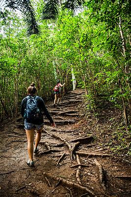 Hikers on Sleeping Giant Trail, Kauai, Hawaii - p924m2068789 by Rosanna U