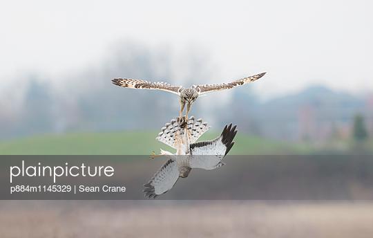 p884m1145329 von Sean Crane
