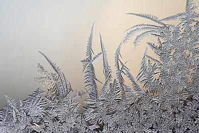 Frostblumen am Fenster - p235m904258 von KuS