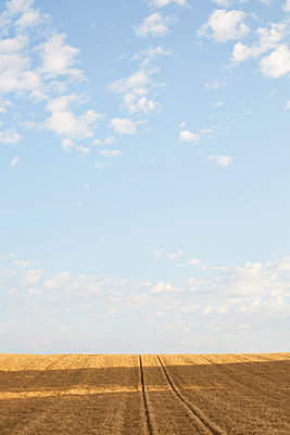 Field stubble on sunny day - p312m1471315 by Jan Tove