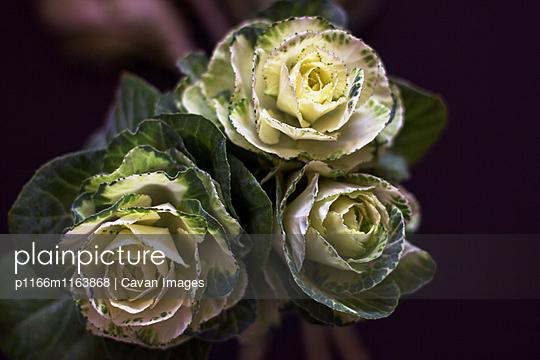 p1166m1163868 von Cavan Images
