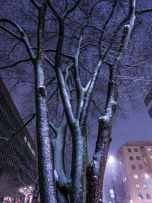 p847m1443852 von Johan Strindberg