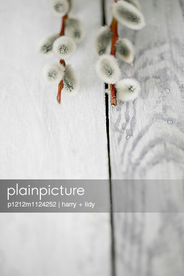 Weidenkätzchen auf Holzbretter - Detail - p1212m1124252 von harry + lidy