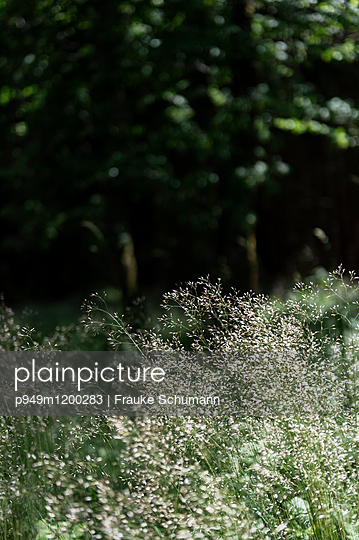 Lichtung im Wald - p949m1200283 von Frauke Schumann