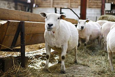 Tierhaltung - p1058m817145 von Fanny Legros