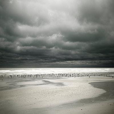 Möwen am Strand - p1137m2008729 von Yann Grancher