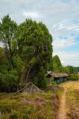 Lüneburger Heide - p1457m2116663 von Katrin Saalfrank
